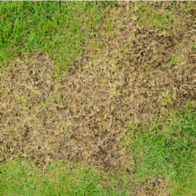brown patch of grass